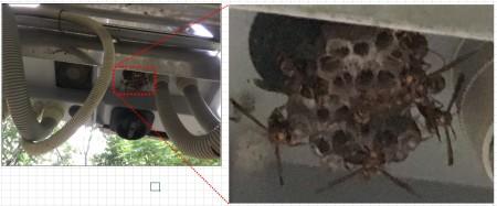 パワコンスイッチ至近にハチの巣