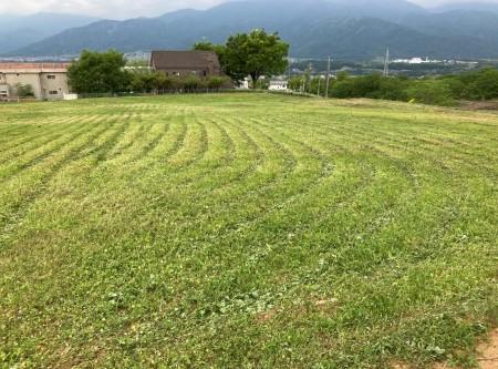 草刈りafter